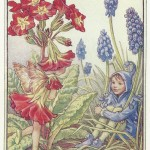 Flower Fairies Polyanthus and Grape Hyacinth fairy old print for sale