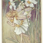 Flower Fairies Narcissus Fairy old print for sale