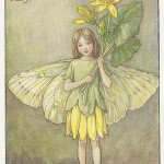 Flower Fairies Celandine Fairy original old vintage print available for sale