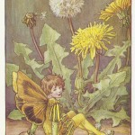 Dandelion Flower Weed Fairy old vintage print for sale