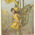 Daffodil Spring Fairy collectable old vintage print for sale
