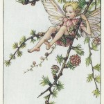 Flower Fairies Larch Tree Fairy original old vintage print