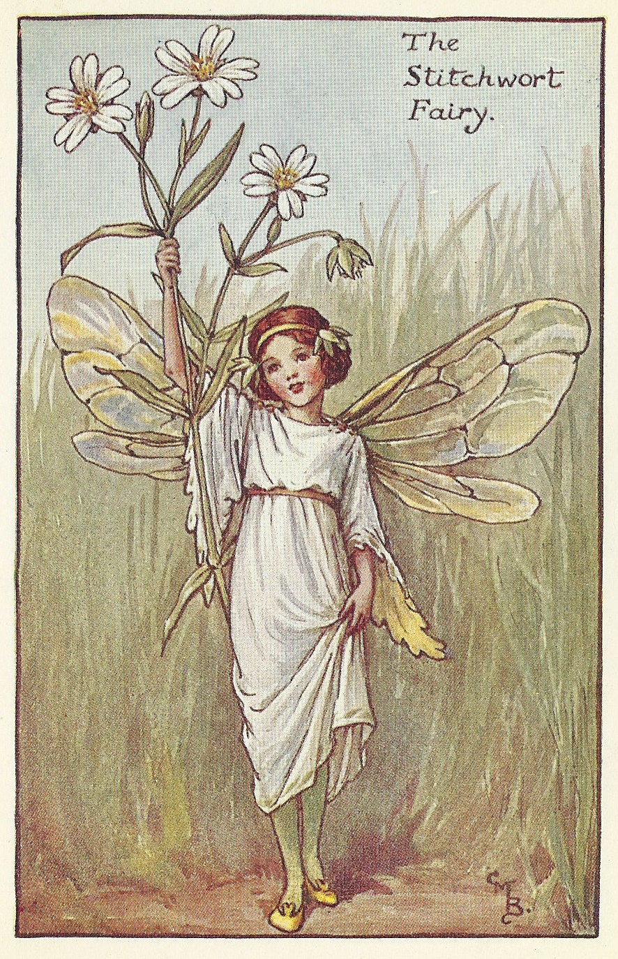flower fairies stitchwort fairy old print for sale frontispiece