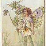 Flower Fairies Heart's-Ease Fairy old original print for sale