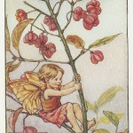 Flowers Spindle-berry Fairy original old print
