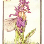 Flower Fairies Orchis Fairy vintage print by Cicely Mary Barker
